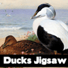 Ducks Jigsaw