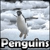 Penguins Crystal Hunter