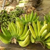 Banana Bunch Jigsaw